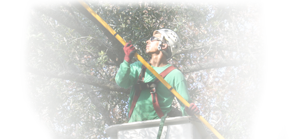 tree care hilton head sc