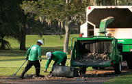 Hilton Head Tree Service Careers