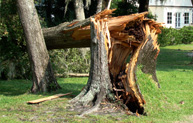 Emergency Tree Service Hilton Head Bluffton SC