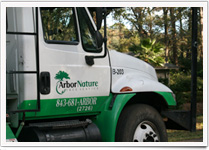 Hilton Head Tree Services